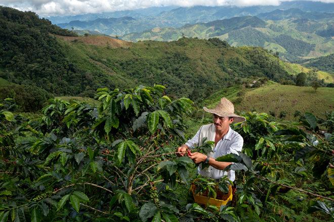 Nespresso_Colombia_generic pictures-11