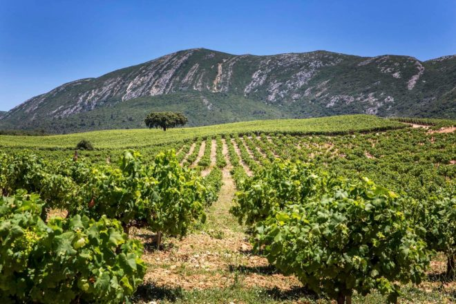 arrabida-vineyards