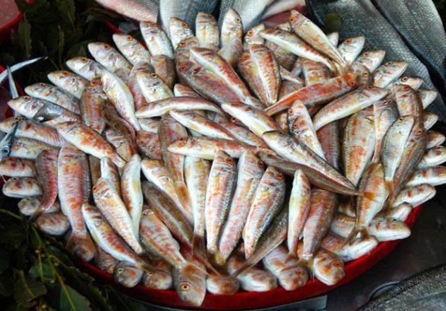 fish barabulka-stambul